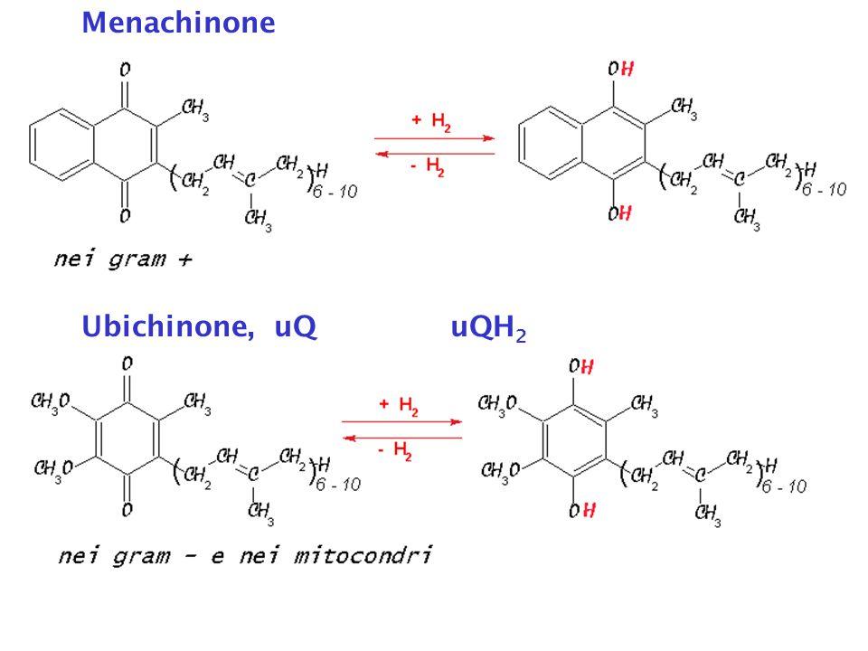 Menachinone Ubichinone, uQ uQH2