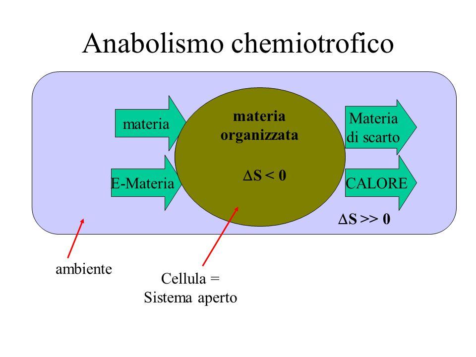 Anabolismo chemiotrofico