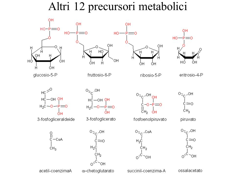 Altri 12 precursori metabolici
