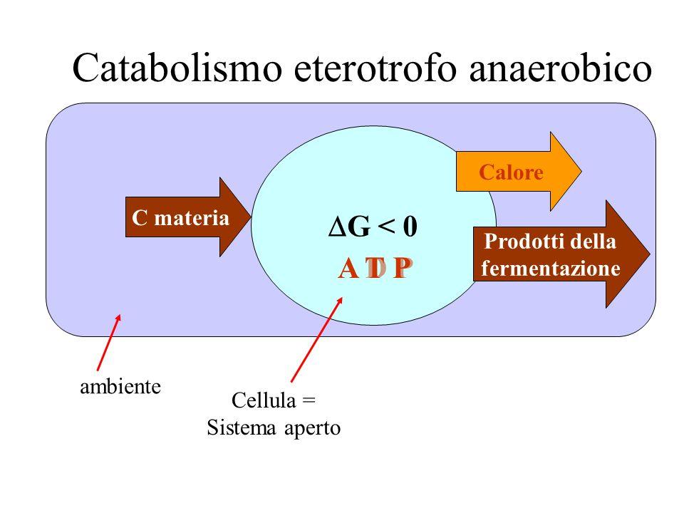 Catabolismo eterotrofo anaerobico