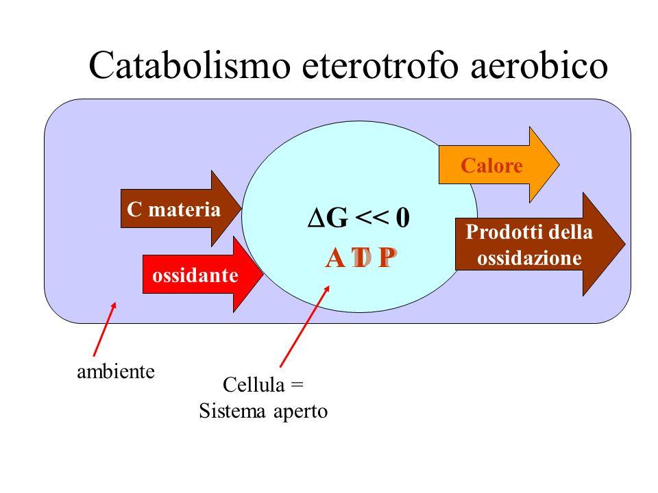 Catabolismo eterotrofo aerobico