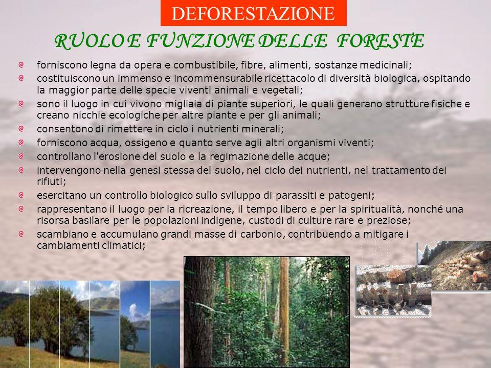 RUOLO E FUNZIONE DELLE FORESTE