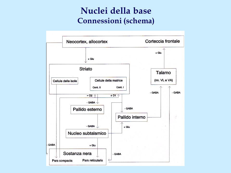Nuclei della base Connessioni (schema)