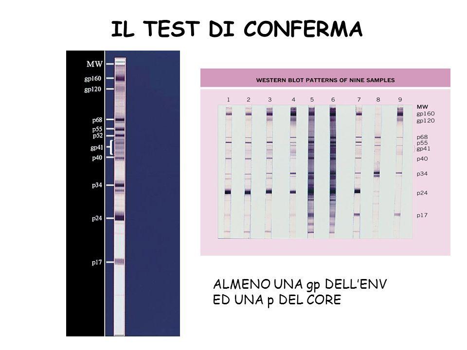 IL TEST DI CONFERMA ALMENO UNA gp DELL'ENV ED UNA p DEL CORE