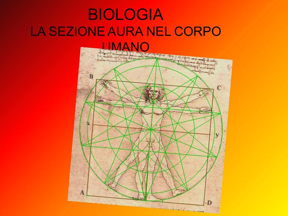 BIOLOGIA LA SEZIONE AURA NEL CORPO UMANO