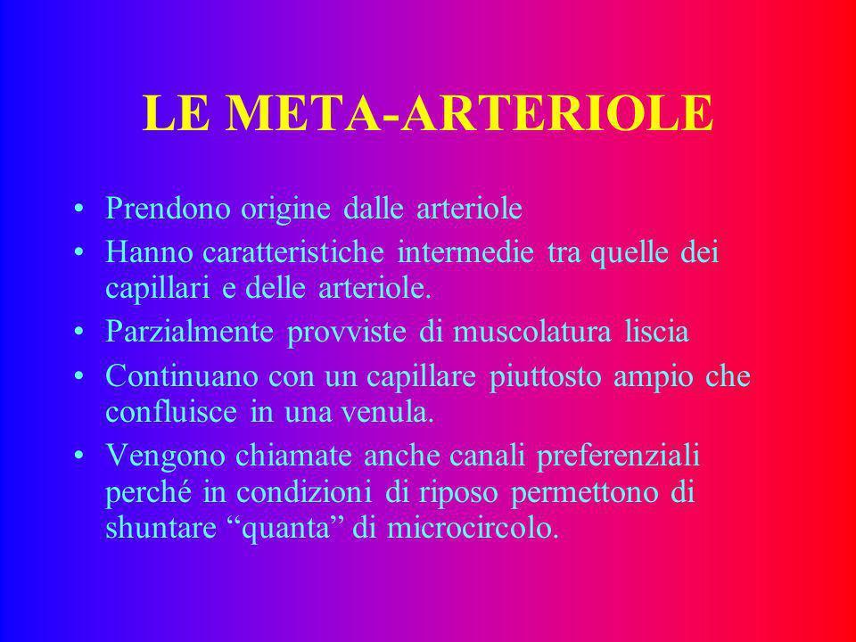 LE META-ARTERIOLE Prendono origine dalle arteriole