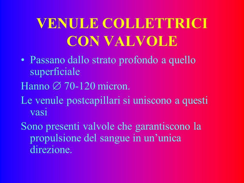 VENULE COLLETTRICI CON VALVOLE