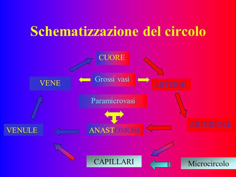 Schematizzazione del circolo