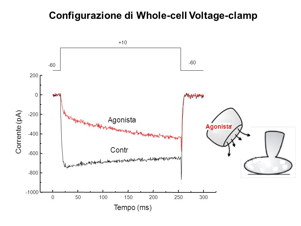Configurazione di Whole-cell Voltage-clamp