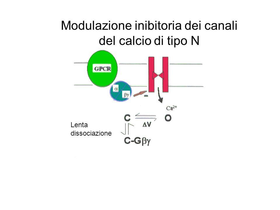 Modulazione inibitoria dei canali del calcio di tipo N