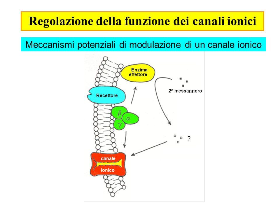 Regolazione della funzione dei canali ionici