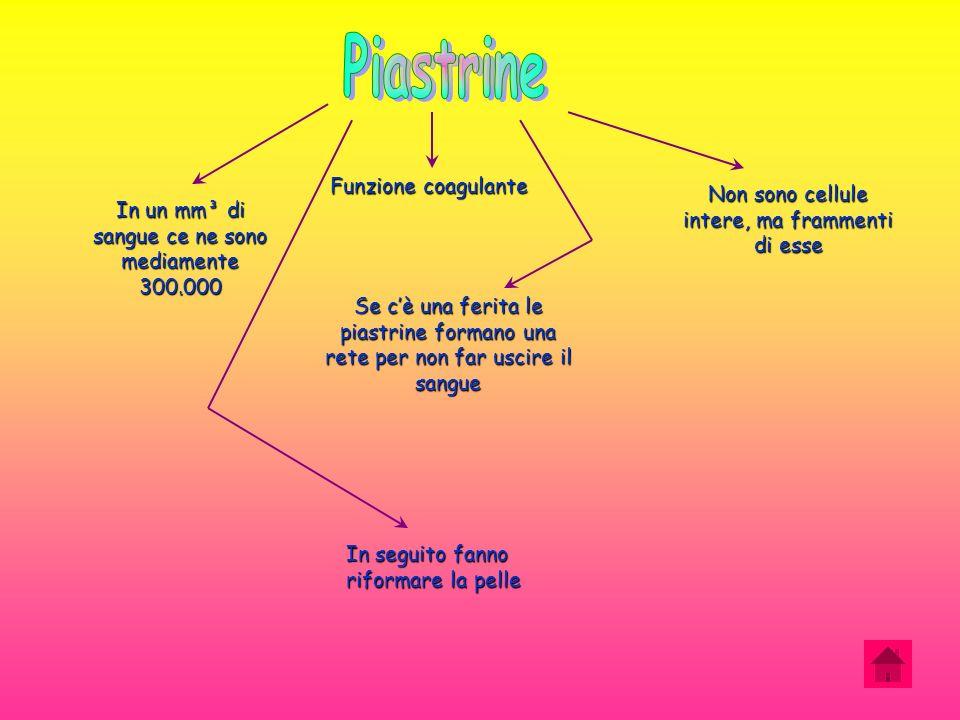 Piastrine Funzione coagulante