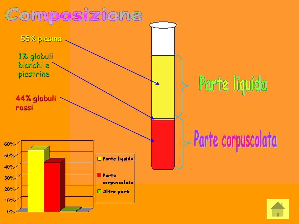 Composizione Parte liquida Parte corpuscolata