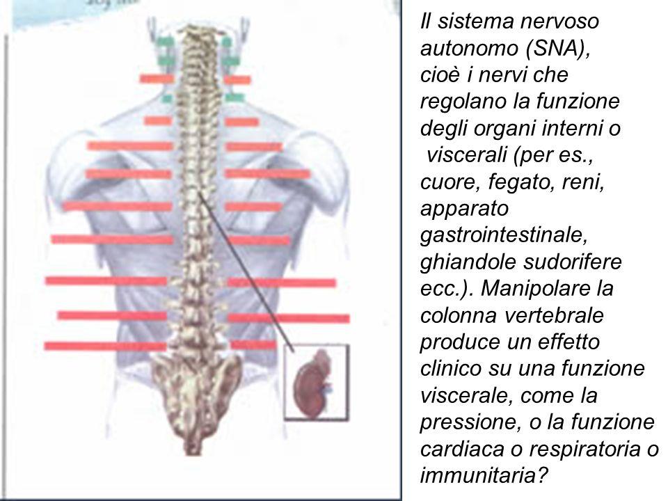 Il sistema nervoso autonomo (SNA),