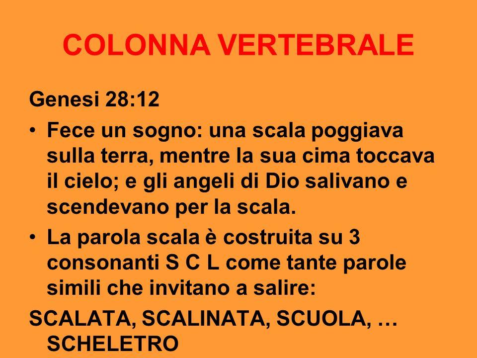 COLONNA VERTEBRALE Genesi 28:12