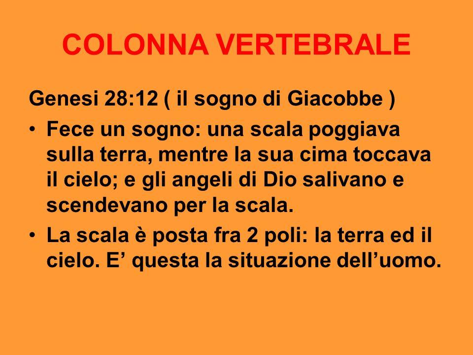 COLONNA VERTEBRALE Genesi 28:12 ( il sogno di Giacobbe )