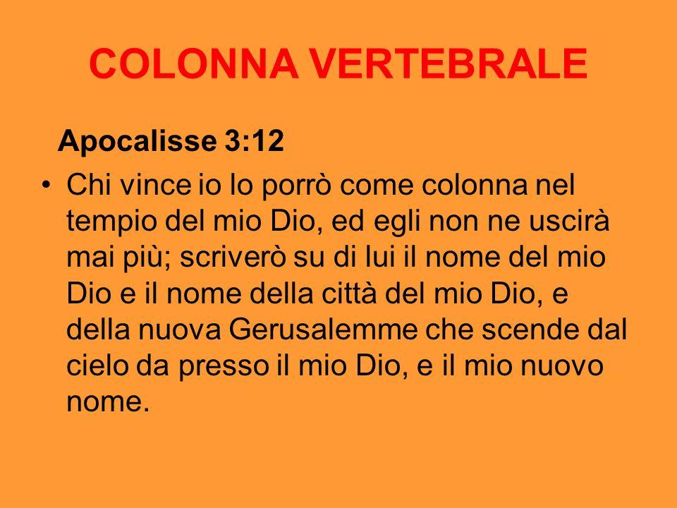 COLONNA VERTEBRALE Apocalisse 3:12
