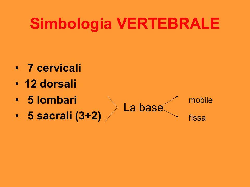 Simbologia VERTEBRALE