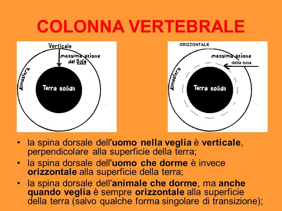 COLONNA VERTEBRALE la spina dorsale dell uomo nella veglia è verticale, perpendicolare alla superficie della terra;