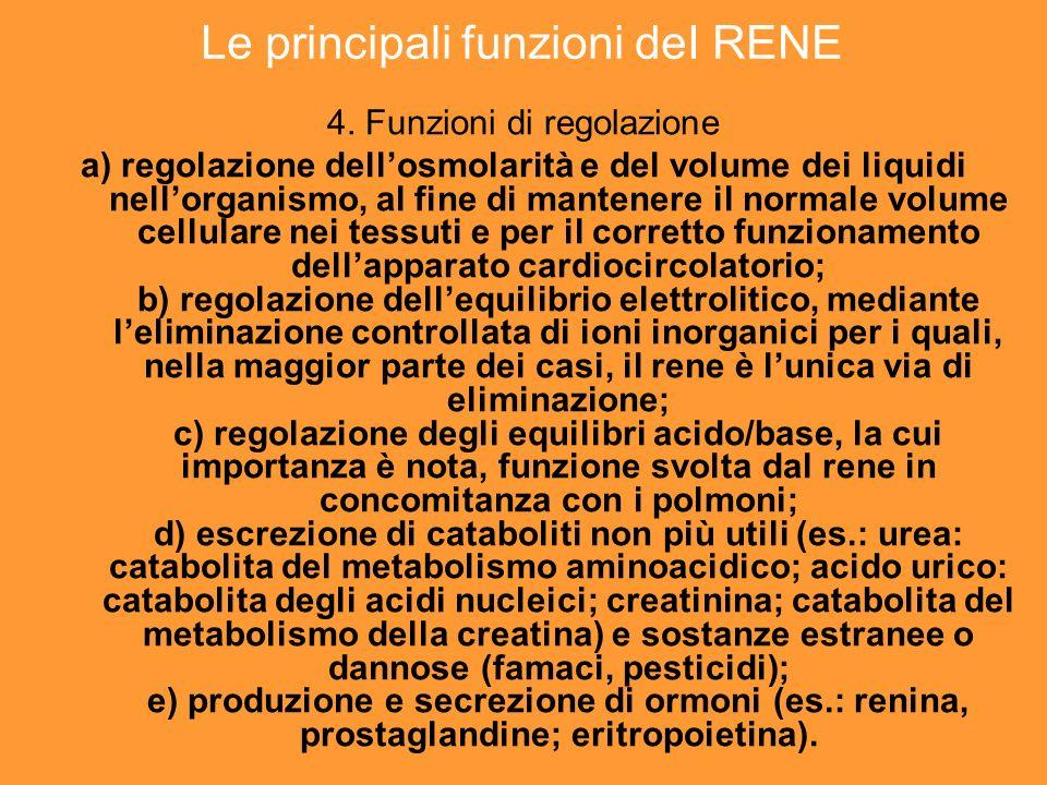 Le principali funzioni deI RENE