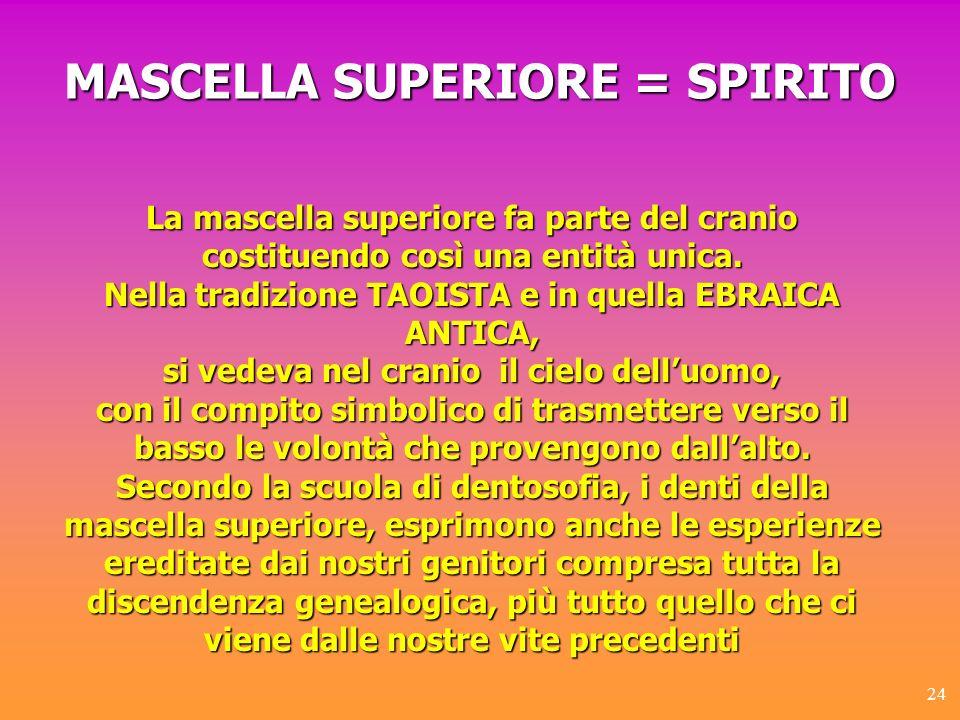 MASCELLA SUPERIORE = SPIRITO