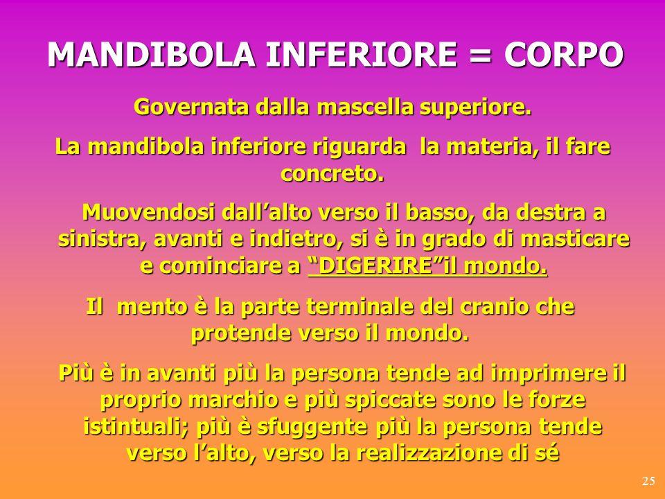 MANDIBOLA INFERIORE = CORPO
