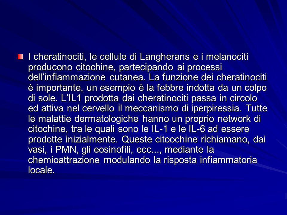 I cheratinociti, le cellule di Langherans e i melanociti producono citochine, partecipando ai processi dell'infiammazione cutanea.