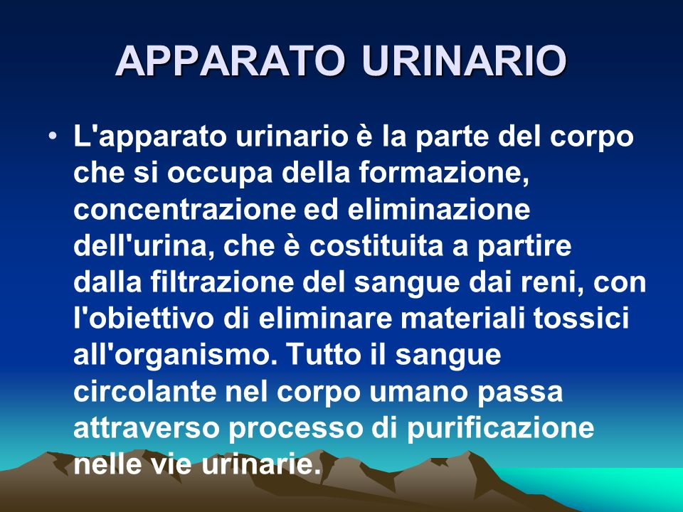 APPARATO URINARIO