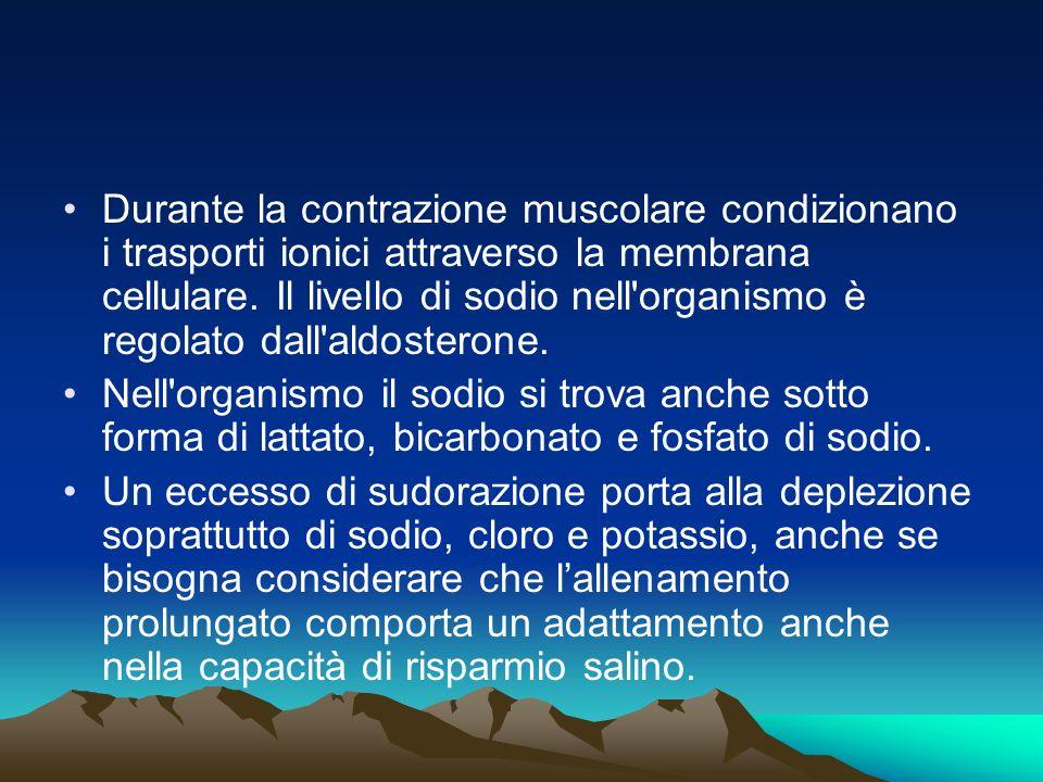 Durante la contrazione muscolare condizionano i trasporti ionici attraverso la membrana cellulare. Il livello di sodio nell organismo è regolato dall aldosterone.