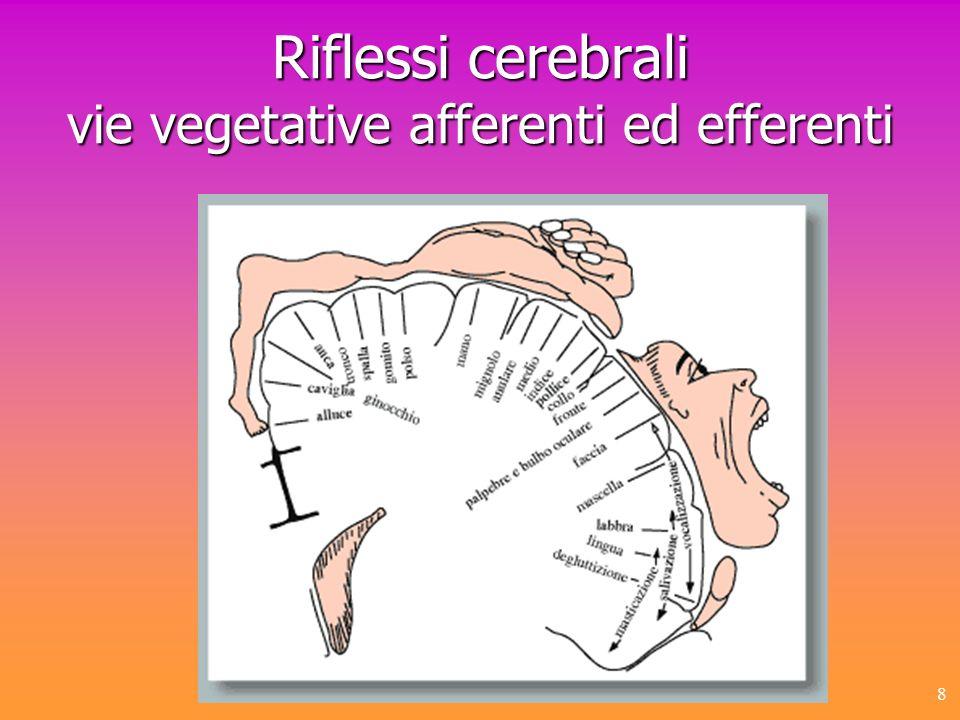Riflessi cerebrali vie vegetative afferenti ed efferenti