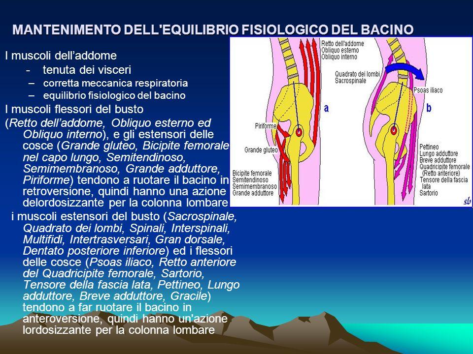 MANTENIMENTO DELL EQUILIBRIO FISIOLOGICO DEL BACINO