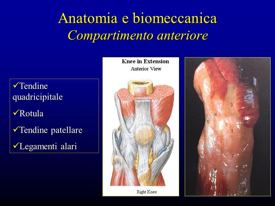 Anatomia e biomeccanica Compartimento anteriore