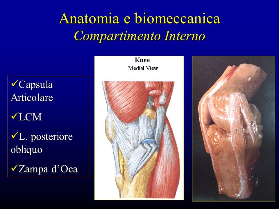 Anatomia e biomeccanica Compartimento Interno