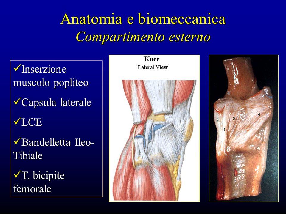 Anatomia e biomeccanica Compartimento esterno