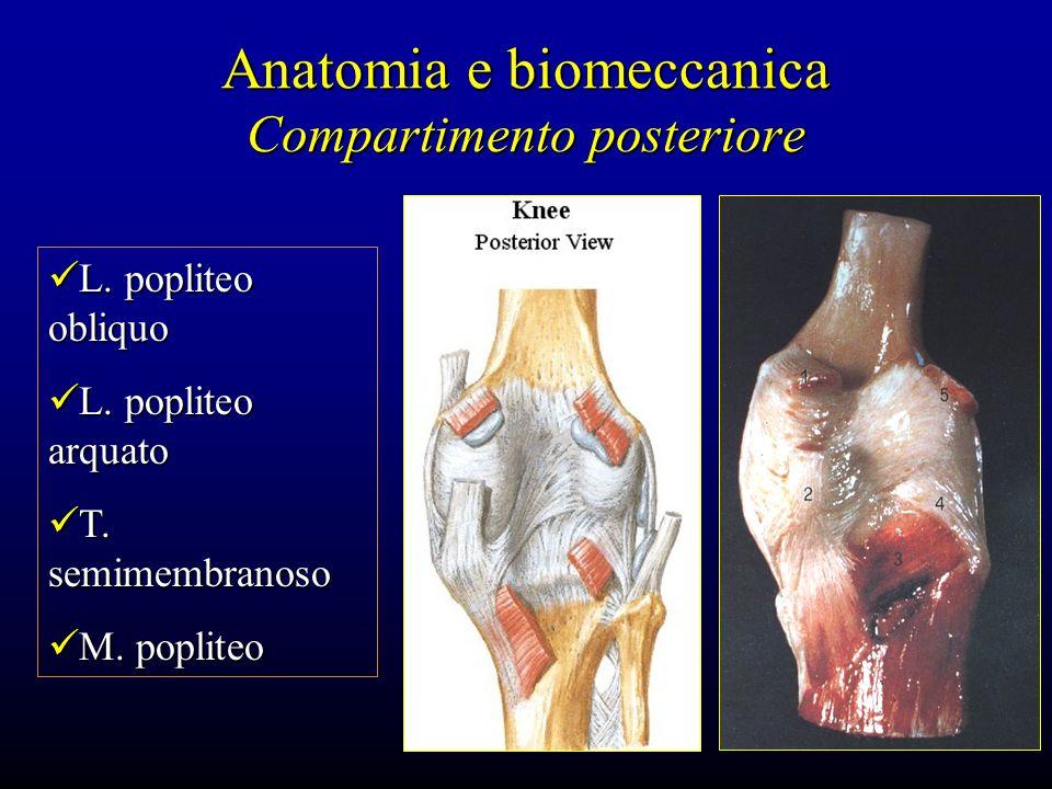 Anatomia e biomeccanica Compartimento posteriore