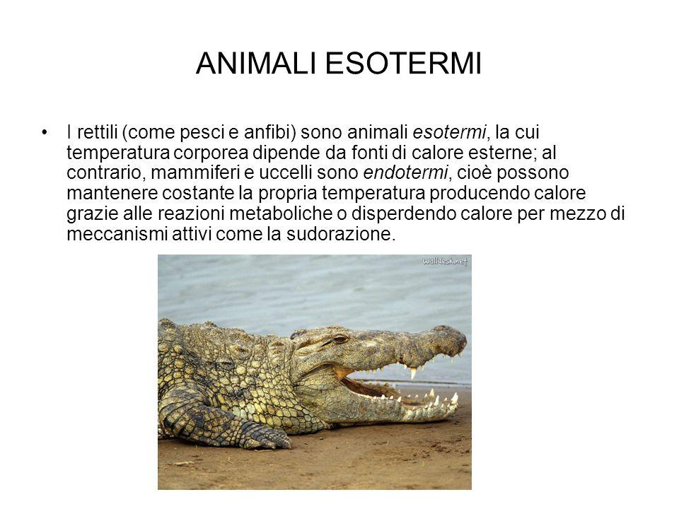 ANIMALI ESOTERMI