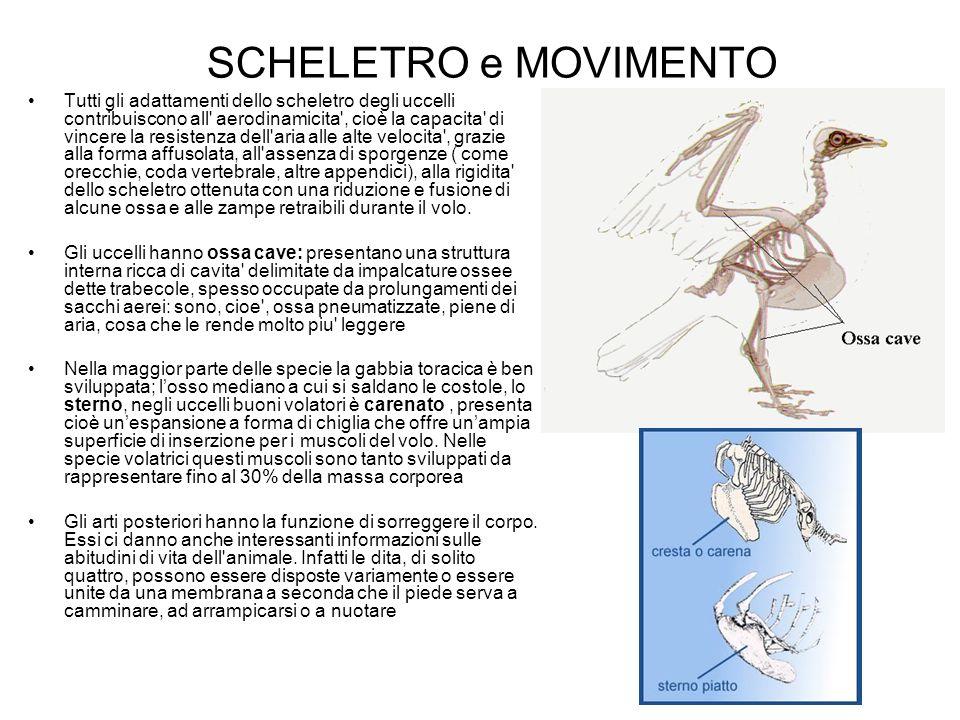 SCHELETRO e MOVIMENTO