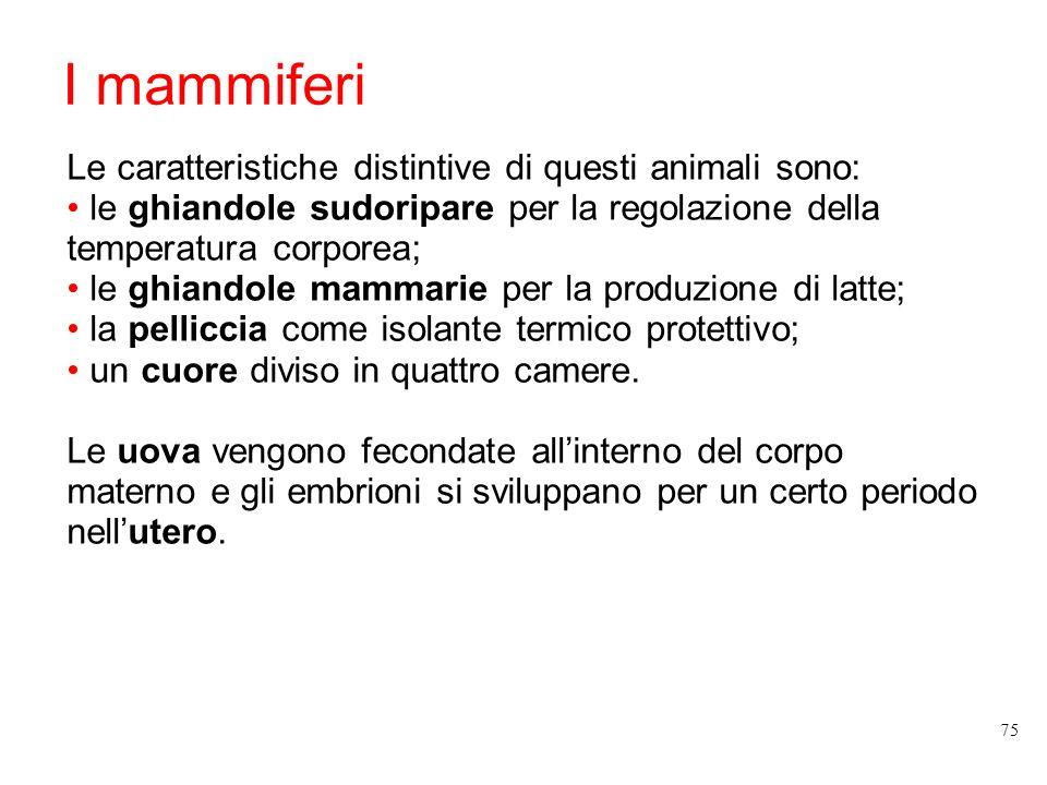 I mammiferi Le caratteristiche distintive di questi animali sono: