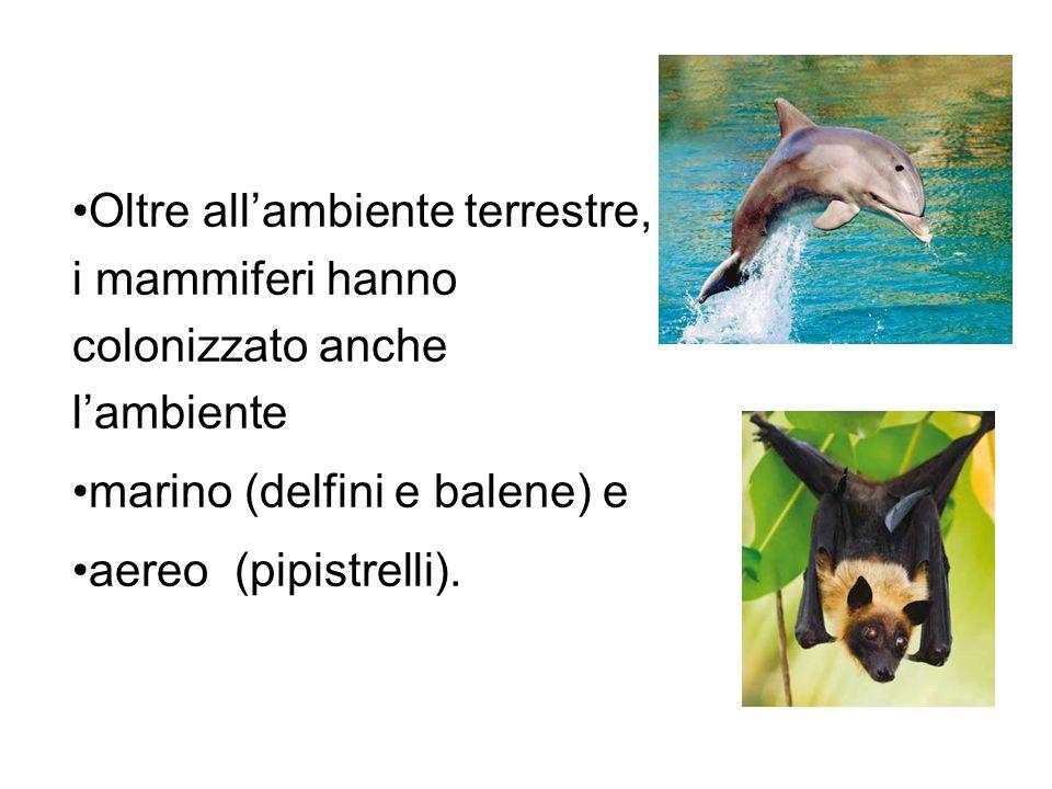 marino (delfini e balene) e aereo (pipistrelli).