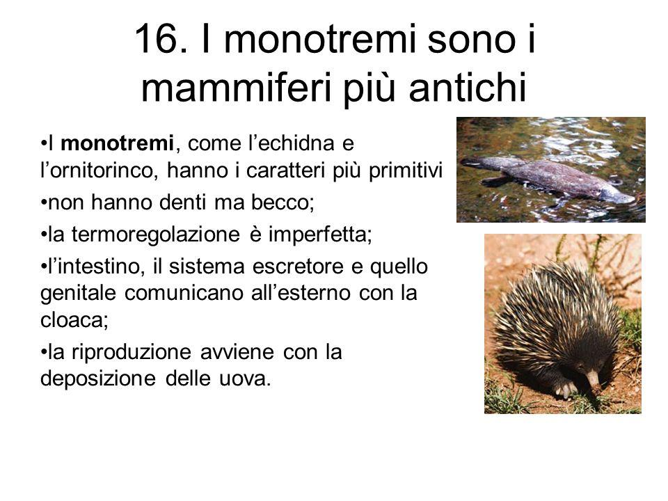 16. I monotremi sono i mammiferi più antichi