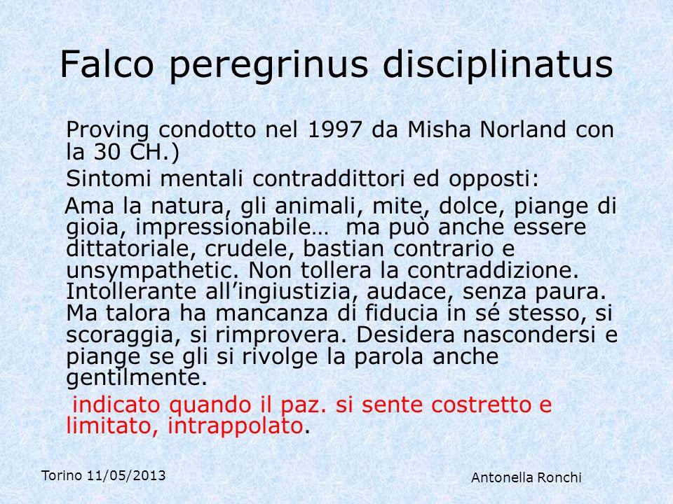 Falco peregrinus disciplinatus