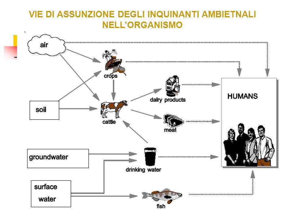 VIE DI ASSUNZIONE DEGLI INQUINANTI AMBIETNALI NELL'ORGANISMO