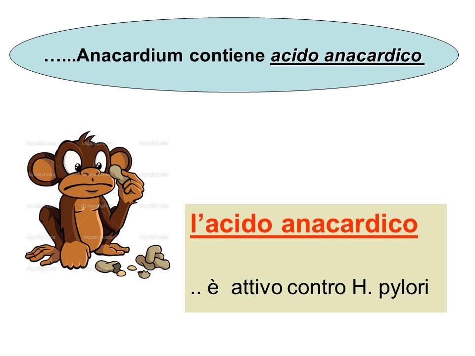 …...Anacardium contiene acido anacardico
