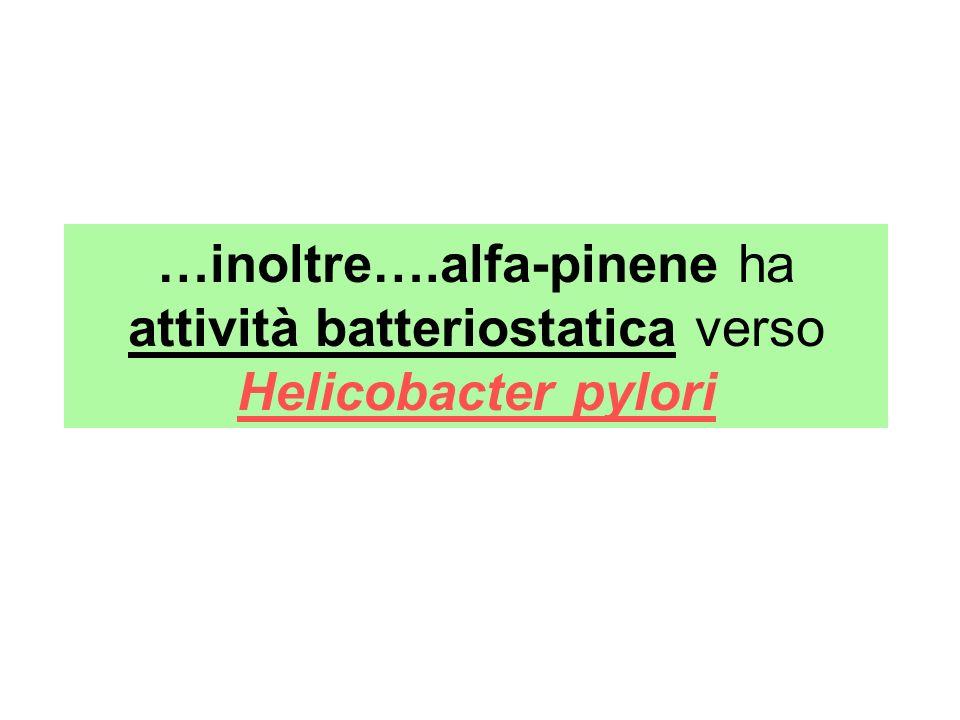 …inoltre….alfa-pinene ha attività batteriostatica verso Helicobacter pylori
