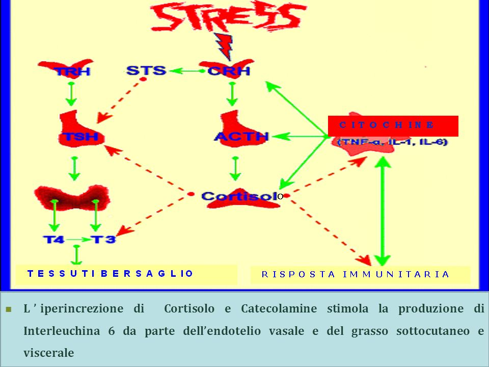 L'iperincrezione di Cortisolo e Catecolamine stimola la produzione di Interleuchina 6 da parte dell'endotelio vasale e del grasso sottocutaneo e viscerale