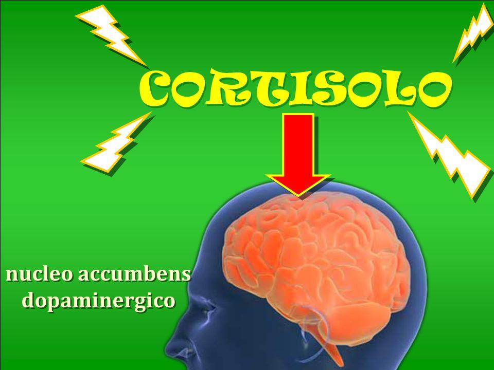 nucleo accumbens dopaminergico