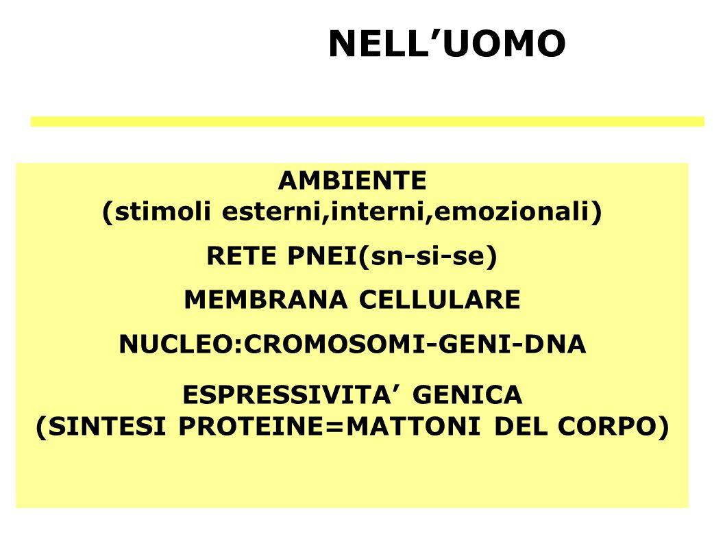 NELL'UOMO AMBIENTE (stimoli esterni,interni,emozionali)