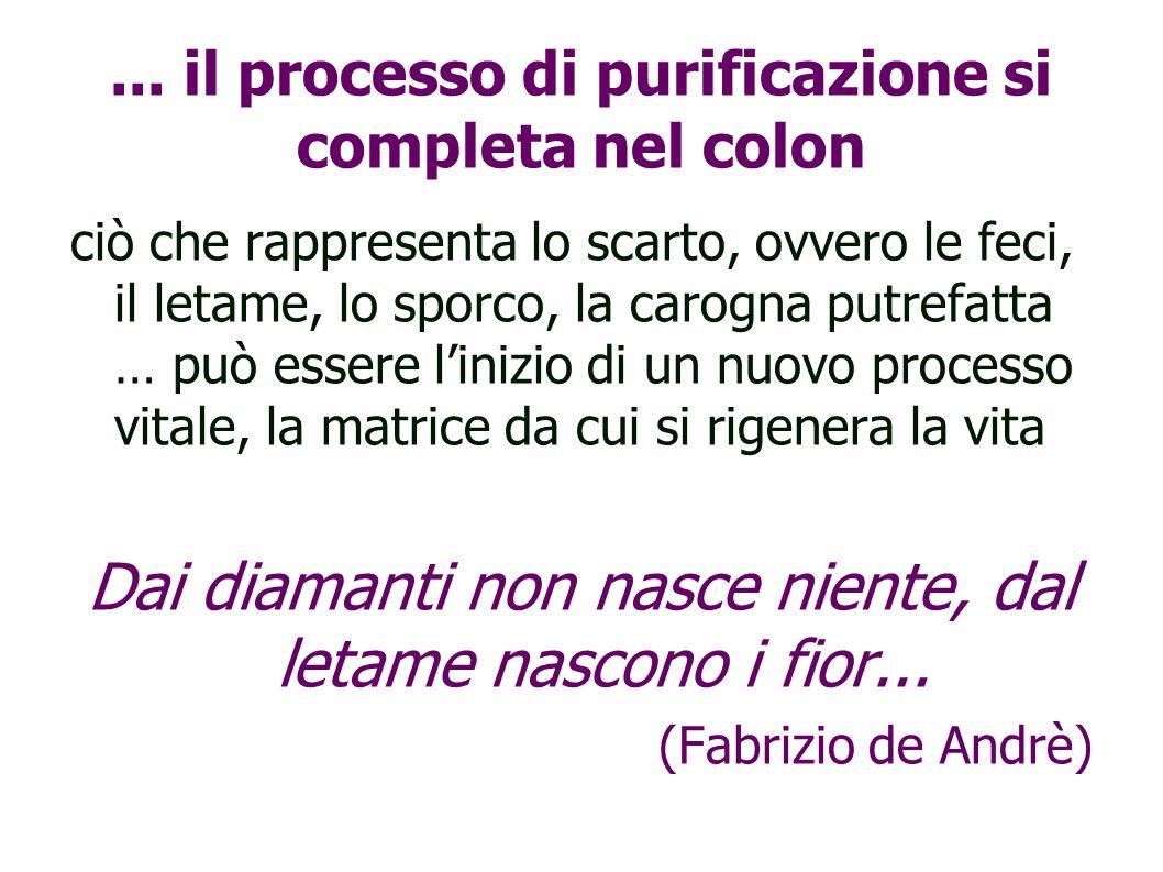 ... il processo di purificazione si completa nel colon