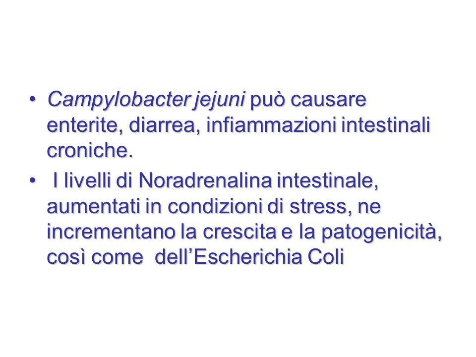 Campylobacter jejuni può causare enterite, diarrea, infiammazioni intestinali croniche.