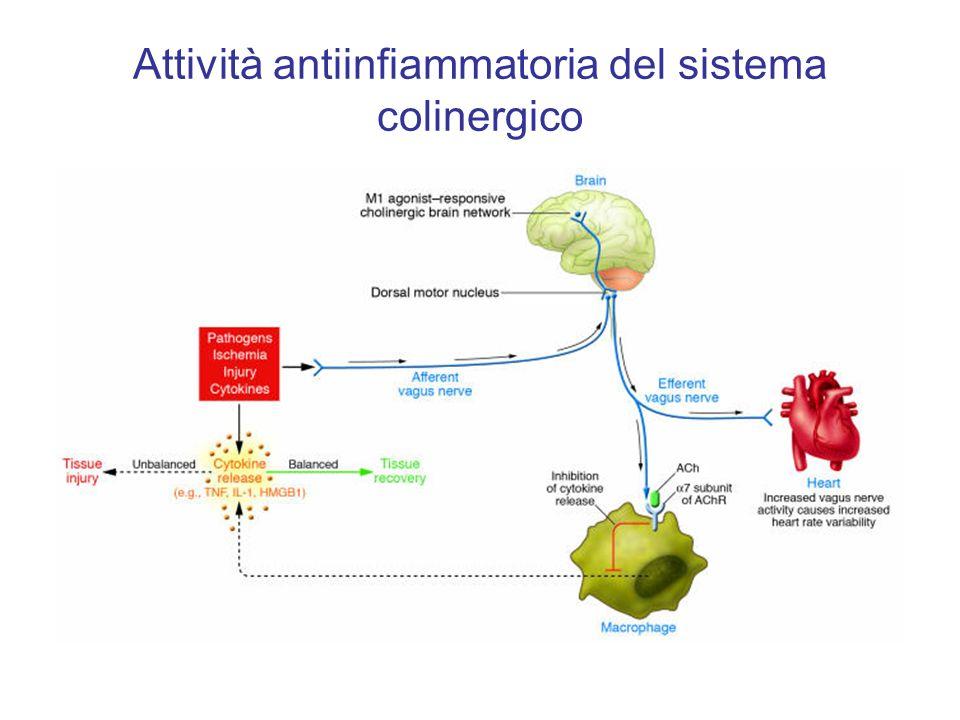 Attività antiinfiammatoria del sistema colinergico
